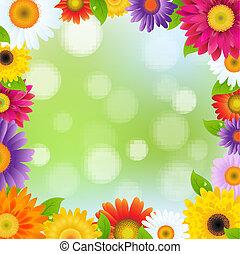 色, フレーム, 花, gerbers