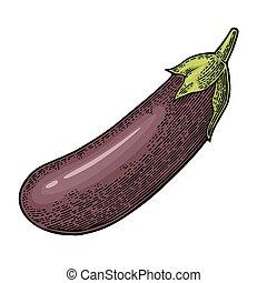 色, 型, 隔離された, イラスト, ベクトル, 背景, 白, 刻まれる, eggplant.