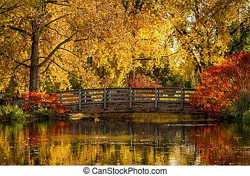 色, 屋外, 公園, 秋