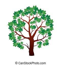 色, 木, イラスト, かえで