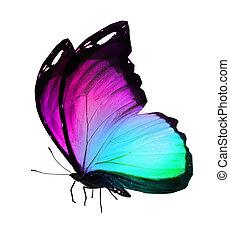 色, 白, 隔離された, 背景, 蝶