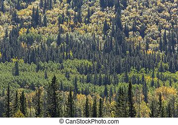 色, 秋, 混ぜられた, 森林