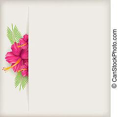 芙蓉屬的植物, 花, 背景