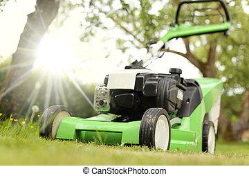 芝刈り機, 日当たりが良い, 庭
