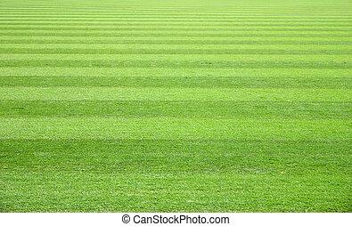 芝生フィールド