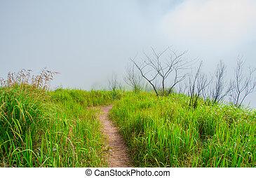 芝生, 小道, 牧草地, 春, 土地