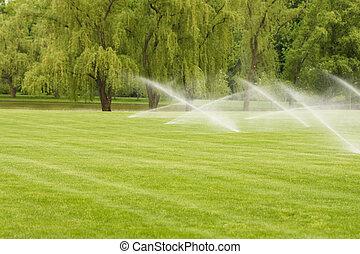 芝生, 水まき