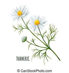 花のヒナギク, つぼみ, 白, 葉