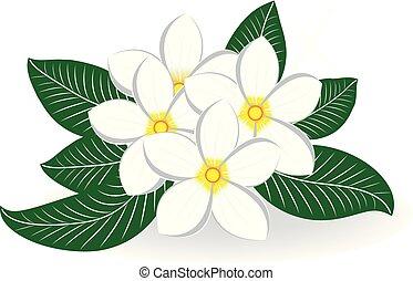 花の 花束, frangipani, plumeria, 結婚式, ∥あるいは∥