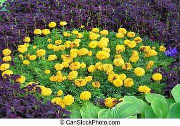 花园, 同时,, flowers.