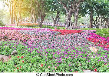 花园, 花