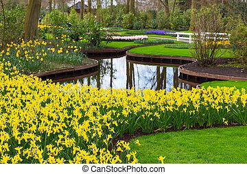 花壇, 春, ラッパスイセンの黄色, 咲く, 花