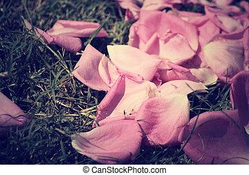 花弁, バラ