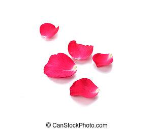 花弁, 背景, 赤は 上がった, 白