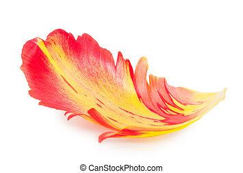花弁, tulip., マクロ