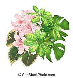 花束, ∥で∥, 熱帯の花, ライト, ピンク, ツツジ, vector.eps
