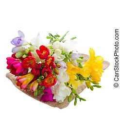 花束, の, フリージア, 花