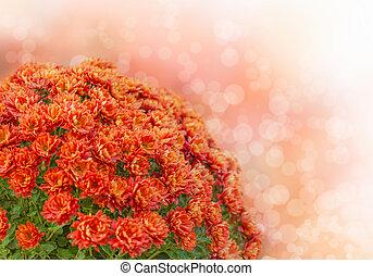 花束, の, 秋, 花
