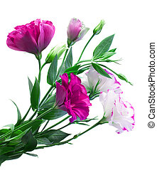 花束, の, eustoma, 花