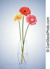 花束, ガラス, daisy-gerbera, つぼ