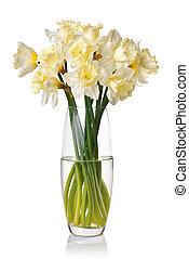 花束, スイセン, 白, 隔離された, つぼ