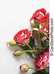 花束, バラ, 白い赤