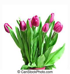 花束, 從, 粉紅色, 鬱金香, 被隔离, 在懷特上