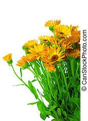 花束, 新たに, calendula