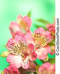 花束, 春の花