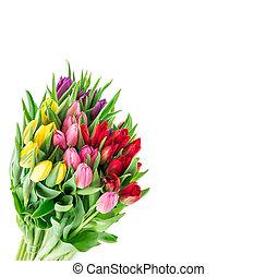 花束, 春, チューリップ, 背景, 白い花