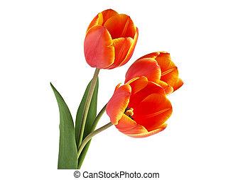 花束, 春, 背景, チューリップ, 白い花