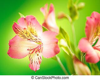 花束, 春, bokeh, 花, 背景