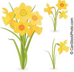 花束, 春, daffodils., コレクション, デザイン, 花, あなたの