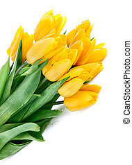 花束, ......的, 黃色的郁金香, 花