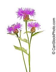 花束, 紫色, 白い花, 背景