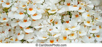 花束, 花, plumeria