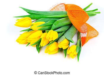 花束, 被隔离, 黃色, 郁金香, 背景, 白色, 花