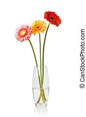 花束, 隔離された, つぼ, ガラス, daisy-gerbera, 白