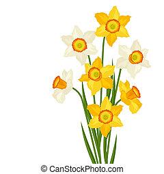 花的花束, 水仙, 在懷特上, 背景。