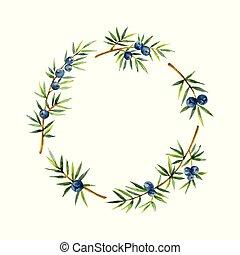 花輪, バックグラウンド。, 植物, 水彩画, 隔離された, 白, juniper