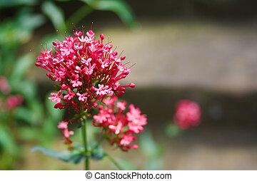 花, から, フォーカス, 背景, 赤