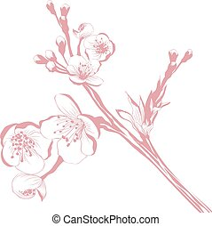 花, さくらんぼ, ブランチ