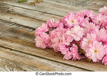 花, さくらんぼ, 手ざわり, 木, 白い赤