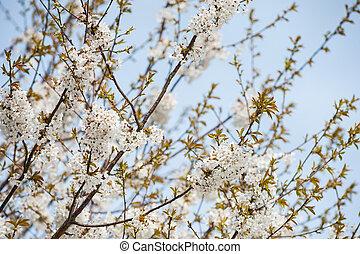 花, さくらんぼ, 抽象的, 木