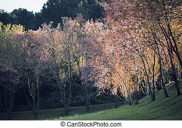 花, さくらんぼ, 花, sakura