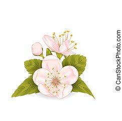 花, さくらんぼ, 葉, 隔離された, 背景, 白