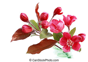 花, さくらんぼ, 赤