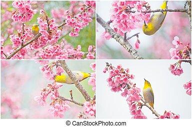 花, さくらんぼ, sakura