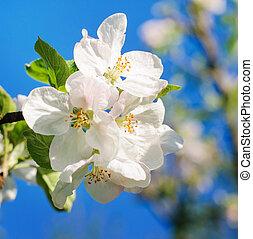 花, アップル, 背景