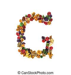 花, アルファベット, 隔離された, 乾かされた, 背景, 白, g
